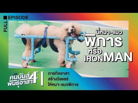 ภารกิจอาสาสร้างวีลแชร์ให้หมา-แมวพิการ - วันที่ 17 Aug 2019