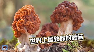 10種世界上最致命的蘑菇,你知道幾個呢?