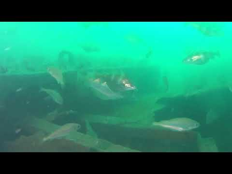 Diveworld Videos   Diveworld Plymouth Wreck Tour 2018