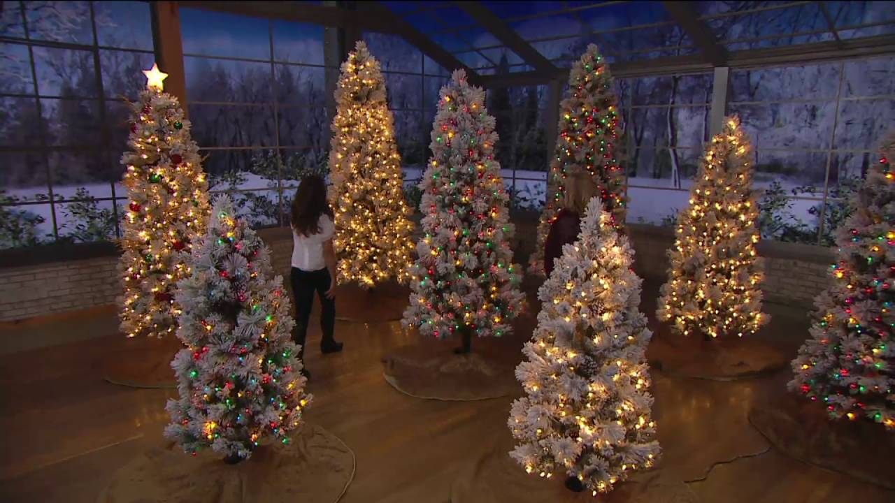 Qvc Christmas Trees.Kringle Express Flocked Winter Slim Christmas Tree On Qvc