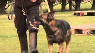 Northumbria Police Dog - Rip