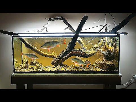 Запустил в аквариум