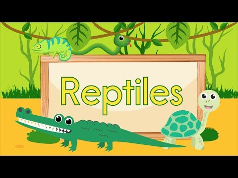 Reptile Song