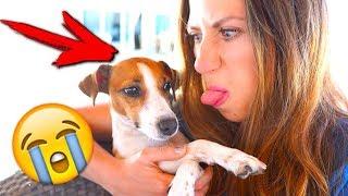 ЧТО ТО ПОШЛО НЕ ТАК 12 ПРОБЛЕМ ОТ СОБАКИ НА ОТДЫХЕ ВСЯ ПРАВДА | Elli Di Pets