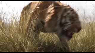 Трейлер к фильму «Книга Джунглiв | Книга джунглей» UA 2016