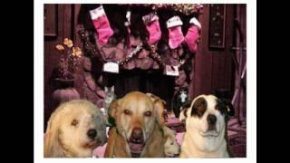 Dogs Barking   Jingle Bells