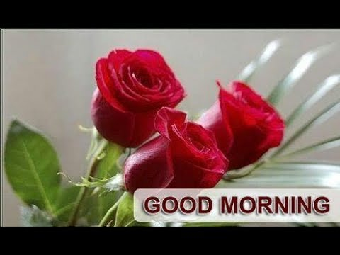Good Morning Video With Beautiful Red Roses Youtube