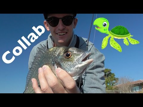 Urban fishing Australia Ft Timmy Turtle Gold Coast canal fishing and pigeon catch EP.370