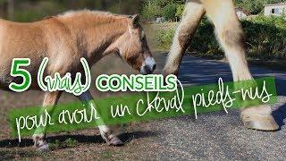 5 CONSEILS POUR PASSER SON CHEVAL PIEDS-NUS
