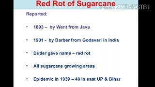 red rot of sugarcane in hindi explained