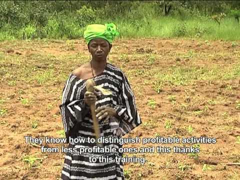 Mali cotton programme