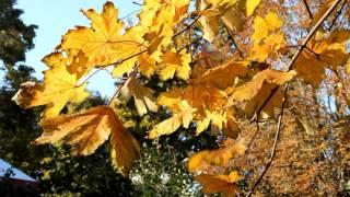 Осень в парке Щербакова(Осеннее видео из донецкого парка Щербакова. Утки, парочки, желтые листья, любимые аллеи - все как в мирной..., 2015-10-16T16:45:50.000Z)