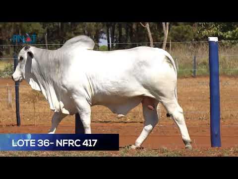 LOTE 36 - NFRC417 - NELORE