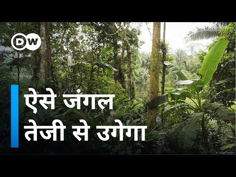 जंगल उगाने की जापानी तकनीक भारत में  [Miyawaki Technique of Plantation]