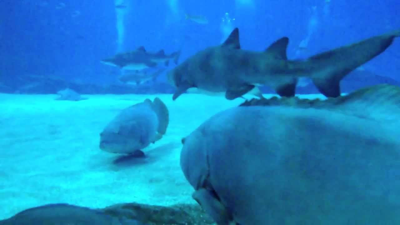 Bien connu Aquarium de Géorgie, à Atlanta - YouTube VJ05