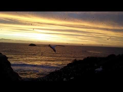 Sunset at Muriwai beach, West Auckland.