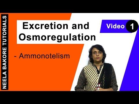Excretion And Osmoregulation - Ammonotelism