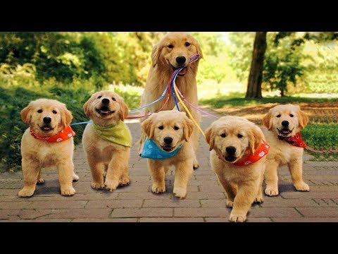 Cute is Not Enough - Funny Cats and Dogs Compilation #55