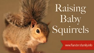 Raising Baby Squirrels