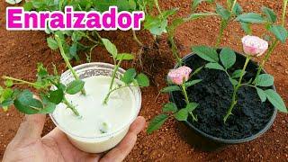MELHOR ENRAIZADOR NATURAL QUE EXISTE