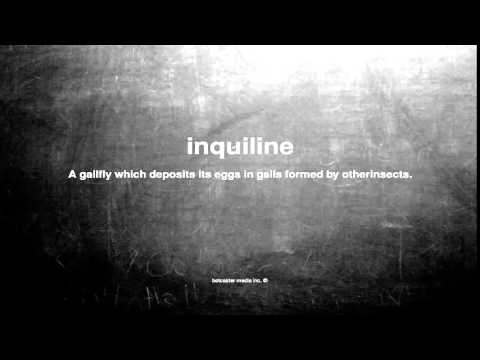 What does inquiline mean