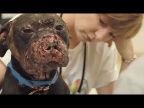 The Face Of Dogfighting One Dog S