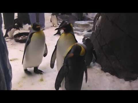 Antarctica Penguins Up Close Tour at SeaWorld Orlando