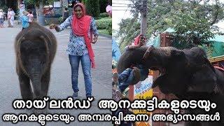 Elephant Show Thailand | തായ്ലൻഡ് ആനക്കുട്ടികളുടെ അമ്പരപ്പിക്കുന്ന അഭ്യാസങ്ങൾ