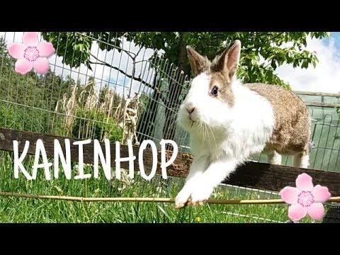 KANINHOP - Kaninchen heben ab 🐇🌸 | Kaninchenstar