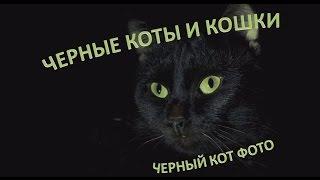 Черные коты: ох, если черный кот дорогу перешел!