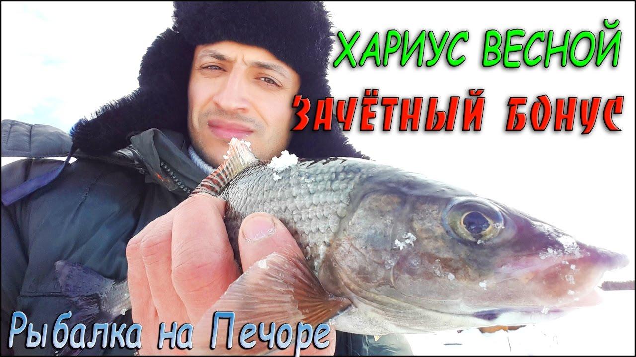 река печора рыбалка хариус