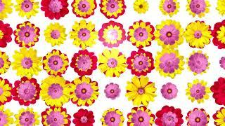 Фон Танцующие цветы. Красивый цветочный футаж