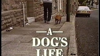 Between Ourselves  A Dog's Life  BBC