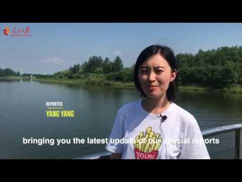 #YangtzeRiverStories: The endangered Yangtze finless porpoise