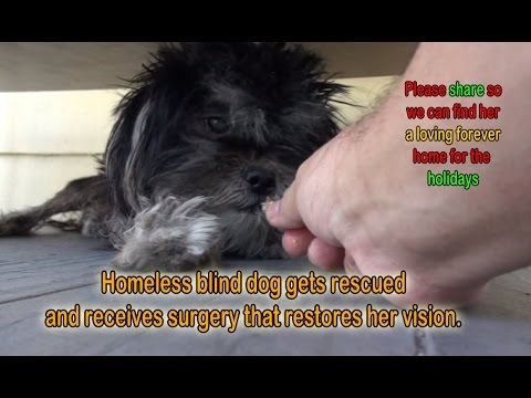 Homeless Blind Dog Gets Rescued And Receives Surgery That