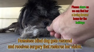 Homeless blind dog gets rescued and receives surgery that restores her vision. If blocked, see below