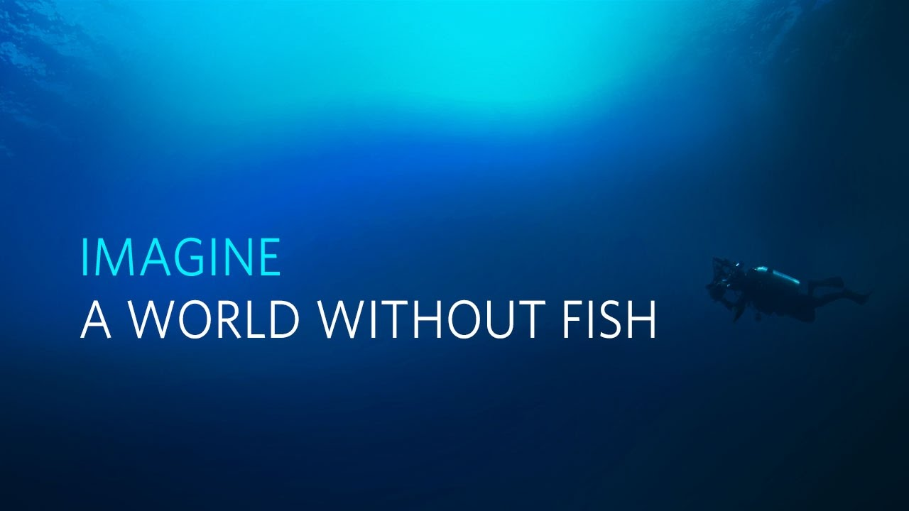 Imagine a world without fish youtube for World without fish