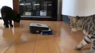 我が家の猫たちがiRobotのルンバとブラーバに遭遇!