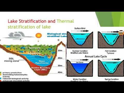 Lake Stratification And Thermal Stratification Of Lake (in Hindi)