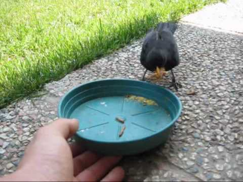 Come fare tortine per gli uccelli la ricetta doovi for Mangiano il pastone