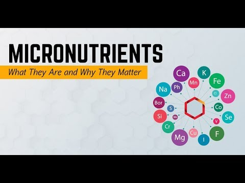 What The Micronutrients Are? || Day 4