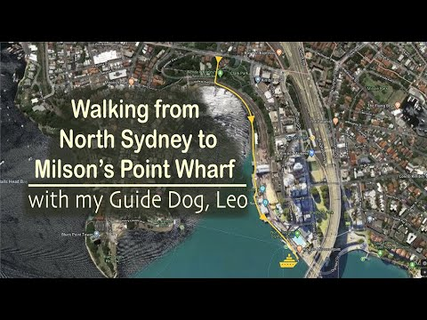 Walking from North Sydney to Milson's Point Ferry with my Guide Dog, Leo