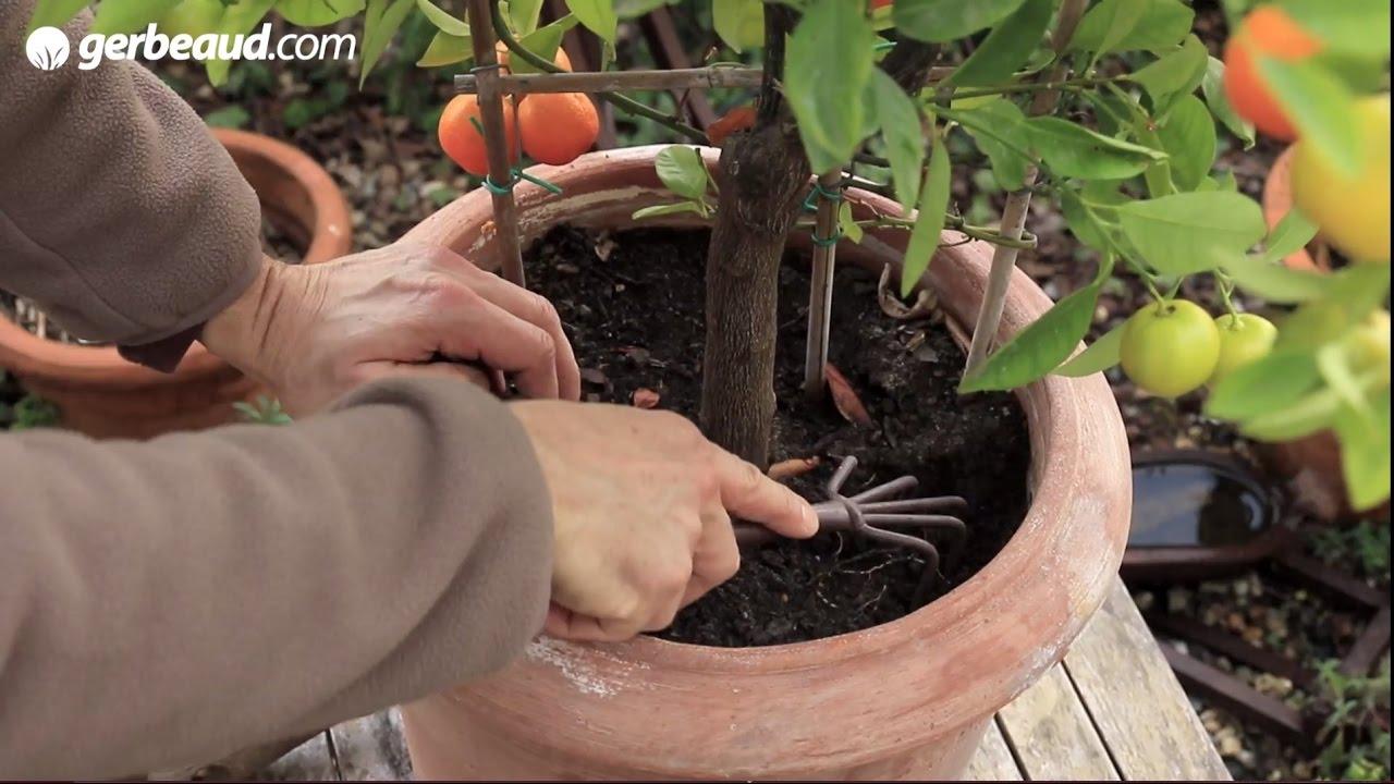 Arbre Fruitier En Pot Interieur plantes en pot : engrais et fertilisation naturelle