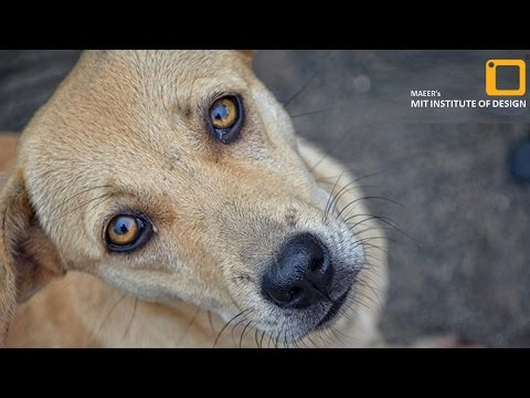 Short Documentary on Animal Welfare | Abandoned | MITID Films
