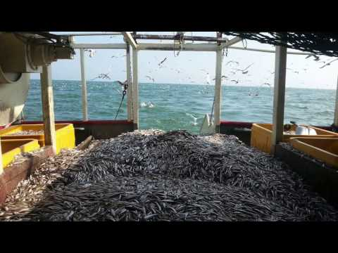 Lake Erie Fisherman