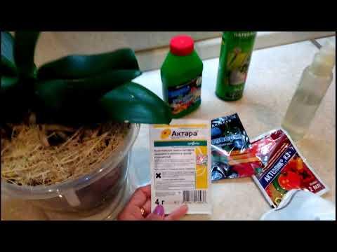Мучнистый червец:как избавиться от мучнистого червеца за одну обработку