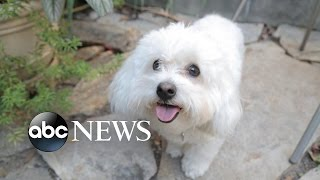 Pets on Prozac: Dogs Take Meds for Anxiety