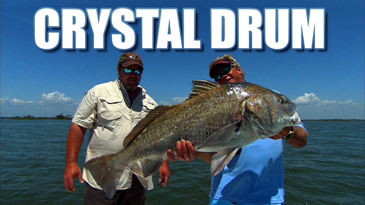 Crystal river florida black drum fishing with billy for Crystal river fl fishing