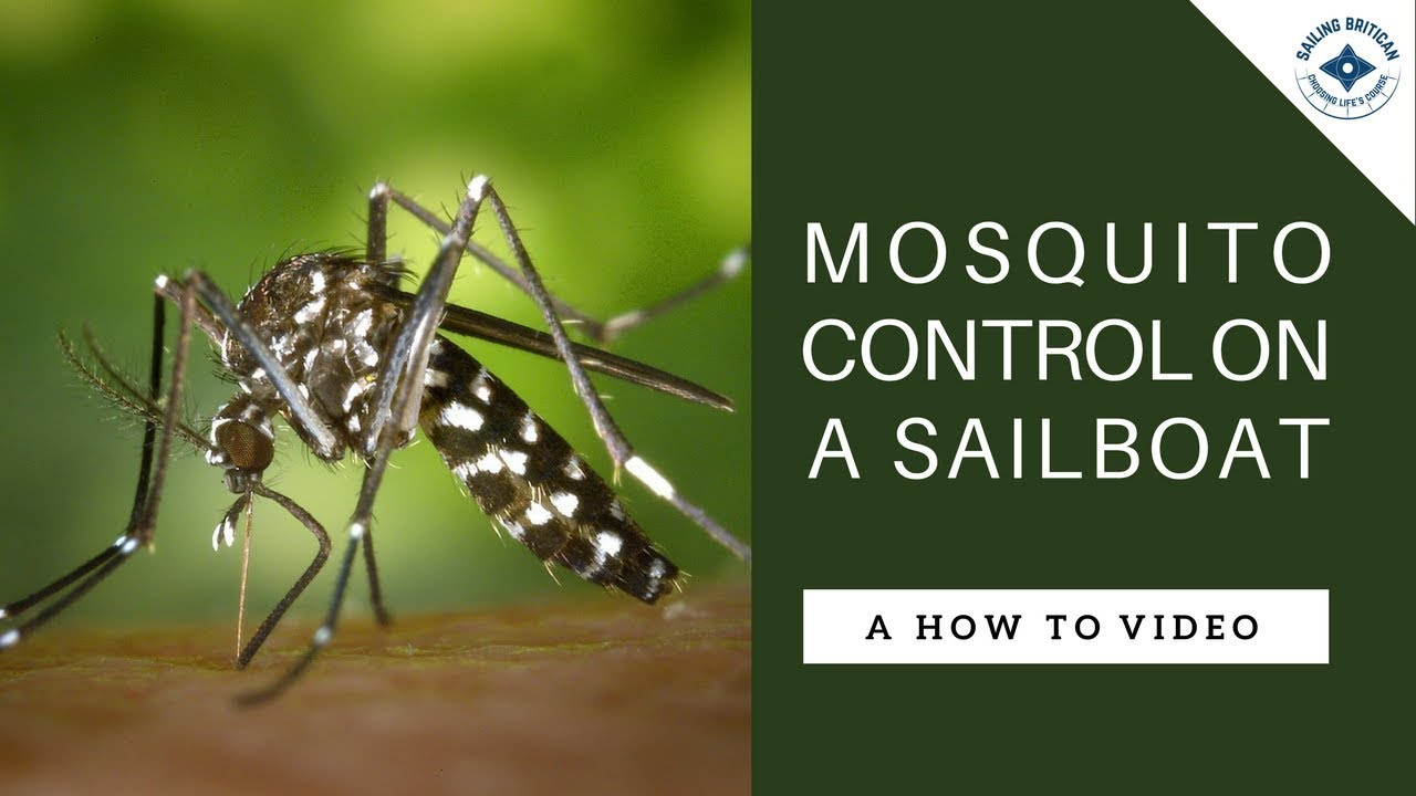 10 Tips for Mosquito Control on a Sailboat - Sailing Britican