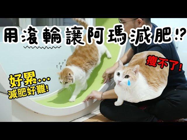 【黃阿瑪的後宮生活】用滾輪讓阿瑪減肥!